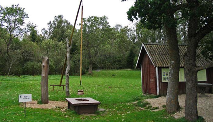 الساحرات المثير للدهشة استونيا